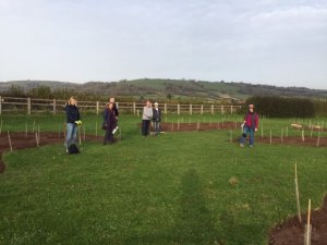 Tree-Planting underway at Easton Jubilee Playing Field